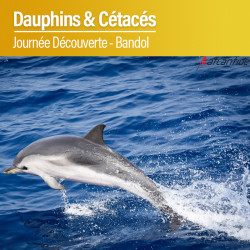 Sortie Dauphins & Cétacés - 25 Juillet 2021